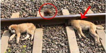 Akılalmaz Vahşet: Yavru Köpekleri Tren Raylarına Bağlayıp Ölüme Terk Ettiler