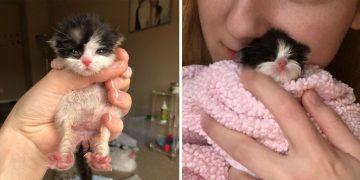 Bir Kedi Sahibi Olmanın Bilimsel Olarak Kanıtlanmış 12 Süper Ötesi Faydası