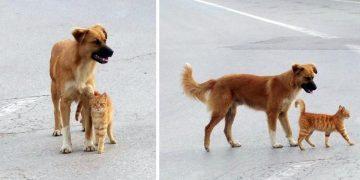 Sokak Köpeği ve Kedinin İçinizi Isıtacak Dostluğu