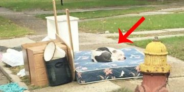 Eşyalarıyla Acımasızca Sokağa Terk Edilen ve Haftalarca Ailesini Bekleyen Köpeğin Hüzünlü Hikayesi