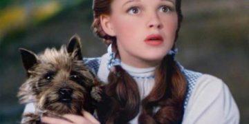 Oscar'lı Ünlü Film Sahnelerinde Rol Almış Sevimli Köpekler