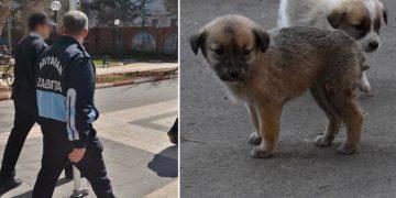 Yazıklar Olsun: Hayvanlar İçin Yardım İsteyen Hayvansever Çocuğa Zabıta Saldırdı