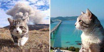 Fotomodellere Taş Çıkartacak Derecede Profesyonel Poz Veren Kedi Nyankichi'nin 27 Fotoğrafı