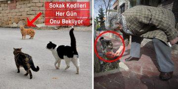 Sokak Kedileri Her Gün Onun Gelmesini Bekliyor: İyi Kalpli Azime Teyze