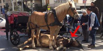 Yazıklar Olsun! Son Zamanların Çok Konuşulan Fotoğrafı: Ölüme Terk Edilen At