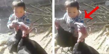 Sosyal Medyanın Çok Konuşulan Olayı: Kavga Eden Hindileri Ayıran Çocuk