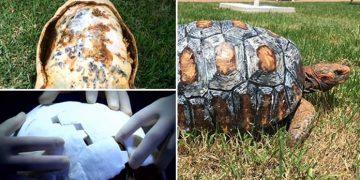 Helal Olsun: Kabuğu Yanmış Kaplumbağaya 3D Yazıcı İle Kabuk Yapan Güzel Kalpli İnsanlar