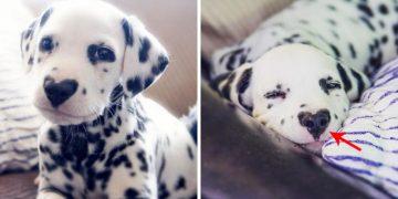 Burnunun Üzerinde Bildiğiniz Kalp Deseni Olan Köpeğin Hayatından 8 Büyüleyici Fotoğraf