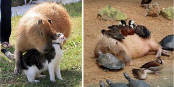 Kıskandık: Kapibaraların Her Canlıyla Arkadaş Olabileceğinin 18 Huzur Dolu Kanıtı