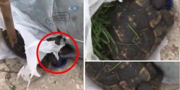 Çöp Konteynerinin Dibinde Hareket Eden Poşetin İçini Açtılar ve Bakın Ne Buldular