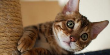Evdeki Kedi Kokusu Nasıl Giderilir?