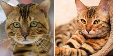 Kaybolan Kedi Açlıktan Bayılmak Üzereydi, Karakolun Kapısına Dayandı Ve…