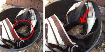 Çantanın İçine Tıkılıp Çöp Kutusuna Atılan ve Ölüme Terk Edilen Zavallı Kedi