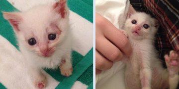 Uyutulmak İstenen Yavru Kedinin Yürekleri Sızlatan Hikayesi