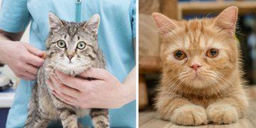 Kedi ve Köpeklerde Yangısal Bağırsak Hastalığı