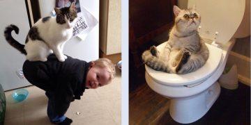 Komik ve Tatlı Olmayı Sonsuza Kadar Sürdürecek 28 Kedi Fotoğrafı