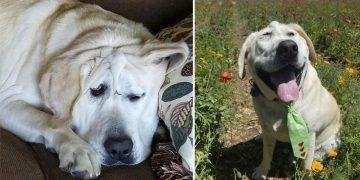 Dış Görünüşü Nedeniyle Sokağa Terk Edilen Köpeğin Mutlu Sonlu Hikayesi
