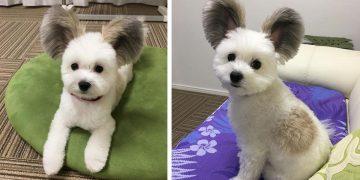 Karşınızda Görünce Yanaklarını Mıncırmak İsteyeceğiniz Sevimli Köpek İle Tanışın