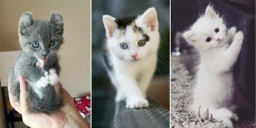 Güzellikleriyle Kalpleri Eritecek Birbirinden Minnoş 21 Kedi Yavrusu