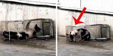 Yazıklar Olsun: Süpermarkette Sucuk Yerken Yakaladıkları Kediyi 2 Gün Boyunca Kafese Kapattılar