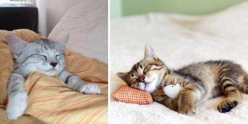 Geceleri Uyumayan Kedinizi Mışıl Mışıl Uyumasını Sağlayacak 11 Püf Nokta