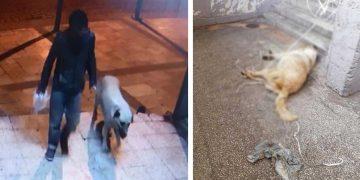 Bağlanıp Canice Tecavüz Edildikten Sonra Öldürülen Zavallı Köpek
