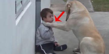 Köpek, Down Sendromlu Çocuğun Yanına Gelip Öyle Bir Şey Yaptı Ki…