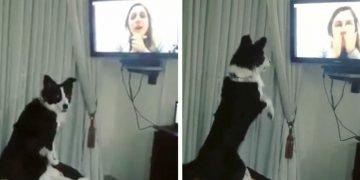 9 Aydır Sahibini Göremeyen Köpek, Televizyonda Görünce Bakın Ne Yaptı