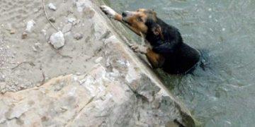 Yüreğimiz Parçalandı: Sokak Köpeğini Kurtarmak İçin Canını Veren Çocuk