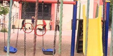 Geleceğimiz Kimlere Emanet: Okul Bahçesinde Köpek Dövüştüren Gençler