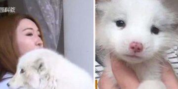 Petshoptan Cins Köpek Satın Alan Kadın, Hayvan Büyüyünce Hayatının Şokunu Yaşadı