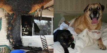 Yanan Evden Sağ Kurtulan Köpek 60 Gün Sonra Bakın Evde Ne Buldu