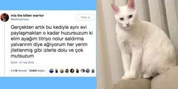 Sahibini Hayattan Soğutan Çılgın Kedi ve Gelen ilginç Tepkiler