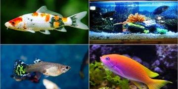 Balık Türleri Hakkında 18 Bilgi