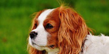 Köpek Sahiplenmeden Önce Cevaplamanız Gereken Sorular