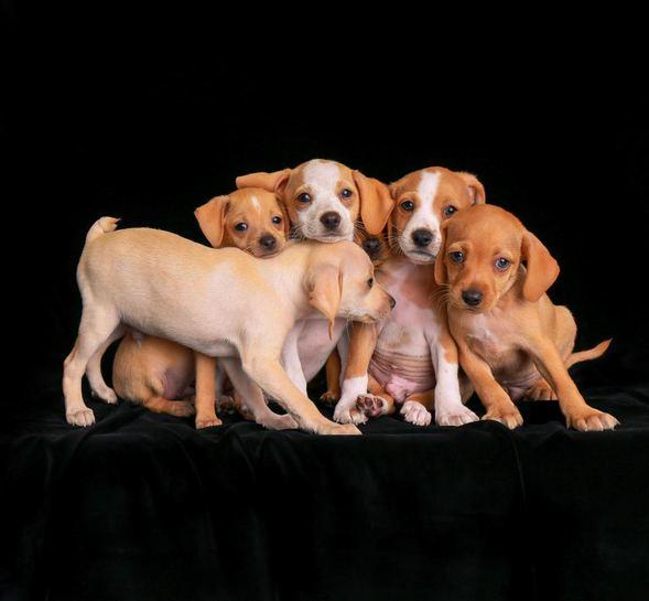 köpek fotoğrafları
