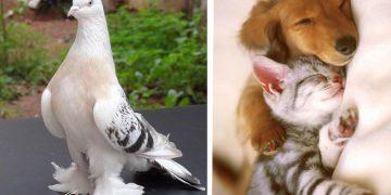 Ev Ortamına ve Yaşam Standartlarına Uygun Bakımı Kolay 14 Evcil Hayvan