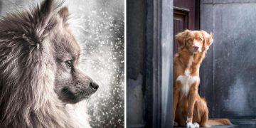 Profesyonel Fotoğrafçılar Tarafından Çekilmiş Dünyanın En Güzel 19 Köpek Fotoğrafı