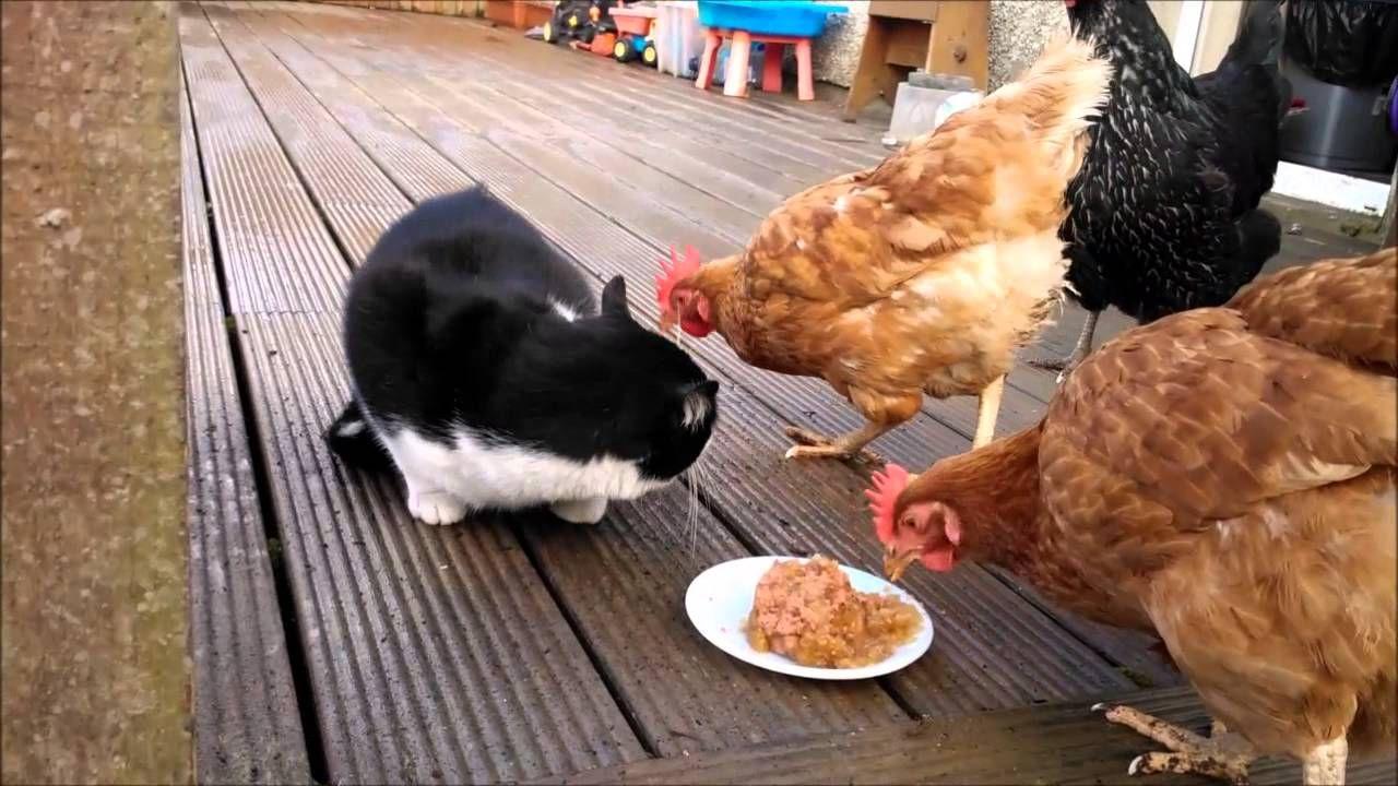 kedi ev yemekleri