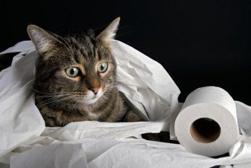Kediler Kakasını Neden Gömer?
