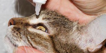 Kedilerde İlaç Kullanımı Hakkında 10 Bilgi