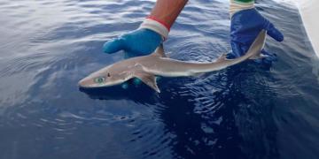 Sosyal Medyanın Çok Konuşulan Olayı: Yeni Bir Köpek Balığı Türü Keşfedildi