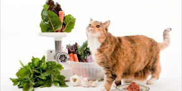 Kedilere Ev Yemeği Verilir Mi?