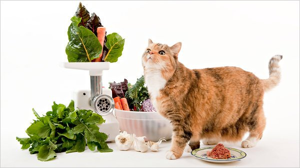 beyaz yiyecekler kedi