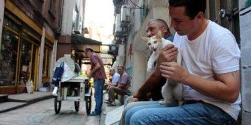 İşkence Edilen Sokak Kedisi Ayşe'yi Esnaf Ameliyat Ettirdi