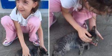 Yol Kenarında Yaralı Halde Gördüğü Yavru Kediye Üzülen ve Ağlayan Minik Fatmanur