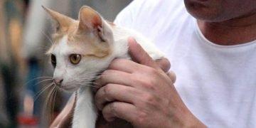 Esnafın Ameliyat Ettirdiği Kedi 'Ayşe' Otomobil Çarpması Sonucu Melek Oldu