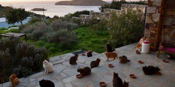 /Hayalimizdeki İş: Deniz Manzarası Eşliğinde 55 Kediye Bakarak Maaş Alabilirsiniz