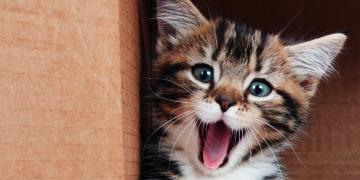 Pet Shop Sitesi Pet Besinleri'nden En Paralılara %20 İndirim