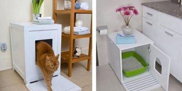 Kedi Kumu Seçimi ve İyi Kedi Kumu Hakkında Bilmeniz Gereken 17 Şey
